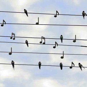 Seminar Sing dich Frei
